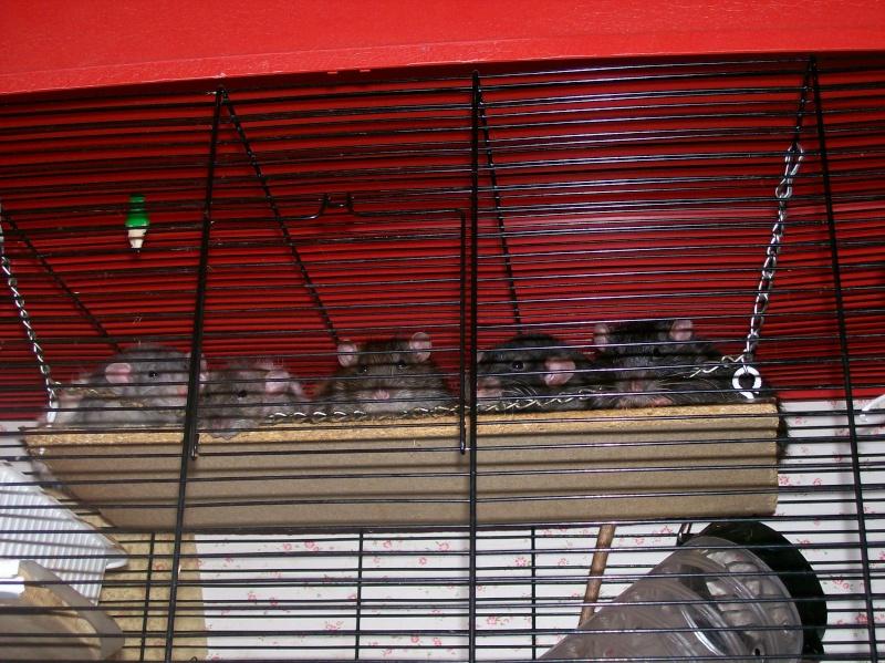Rat qui regarde la télé? 00410