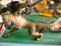 Modellbauregister der Tigerin Pict0455
