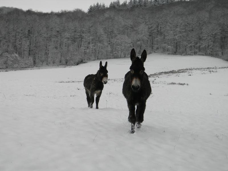 Mes ânes, de la bonne compagnie ! Dscn4110
