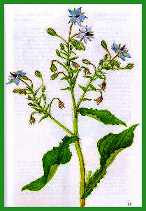 Herbiers Bourra10