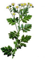 Herbiers Parten10