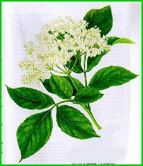 Herbiers Sureau10