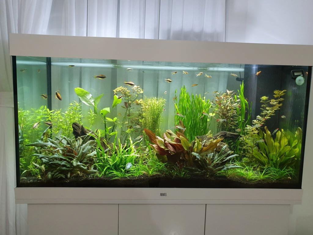 Mon aquarium - Page 3 20190820