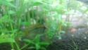 Mon aquarium - Page 3 20181112