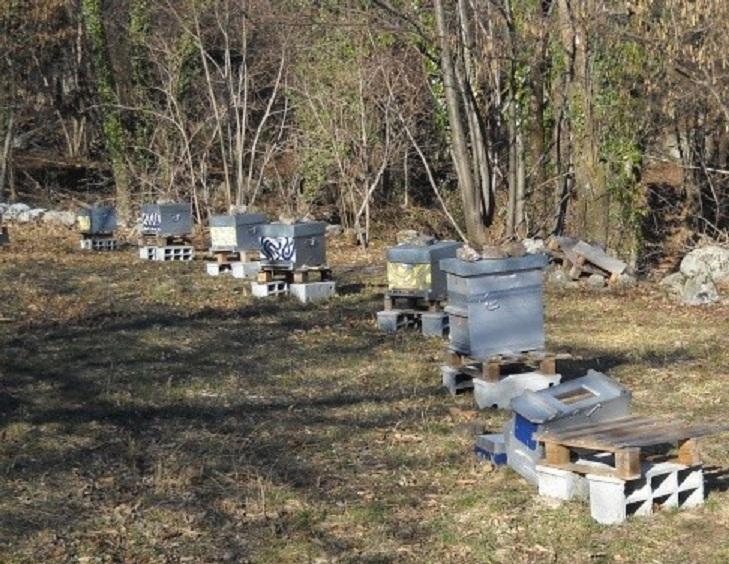 Besoin de conseil pour la protection (peinture) de mes 1ères ruches Tags10