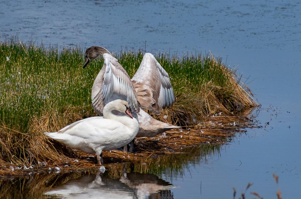 Sortie à la réserve ornithologique du Teich - 24 août 2018 _igp5013