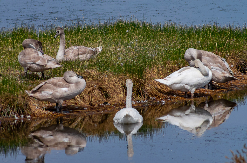Sortie à la réserve ornithologique du Teich - 24 août 2018 _igp5015
