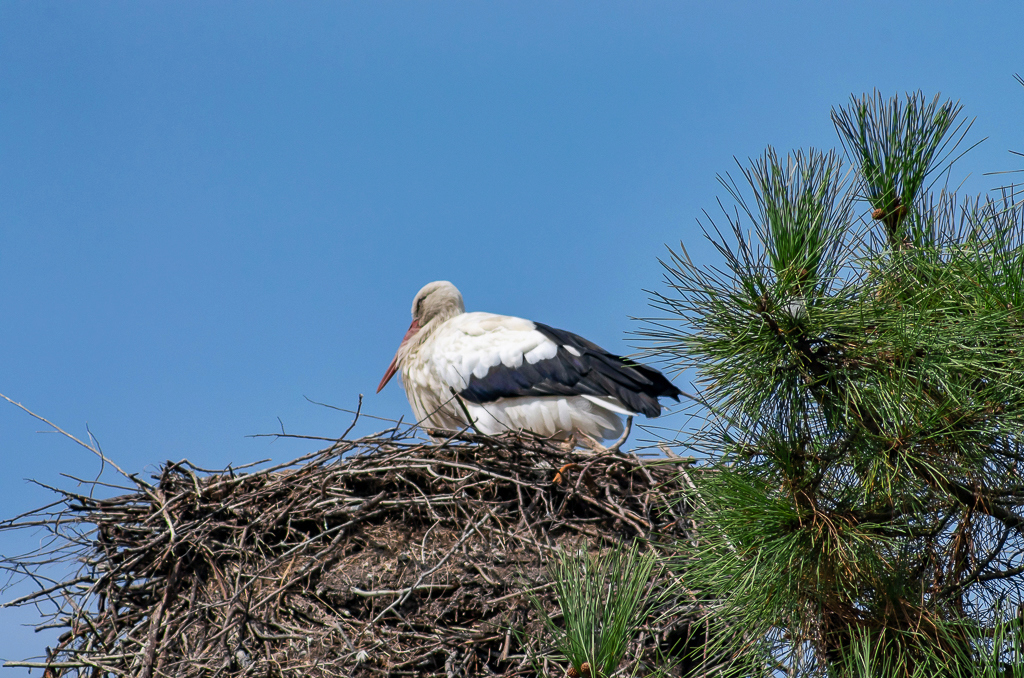 Sortie à la réserve ornithologique du Teich - 24 août 2018 - Page 2 _igp5018