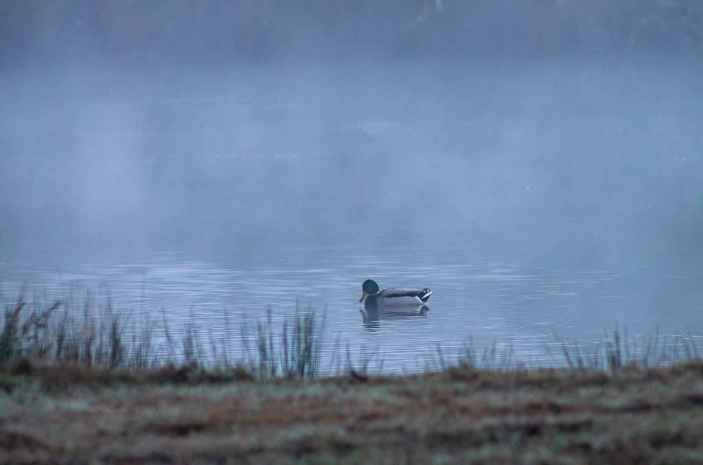 Sortie Réserve Ornithologique du Teich - 21 octobre 2018 _igp5116