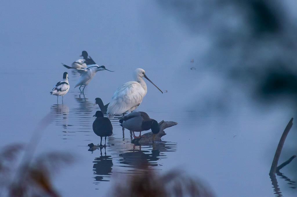 Sortie Réserve Ornithologique du Teich - 21 octobre 2018 _igp5118
