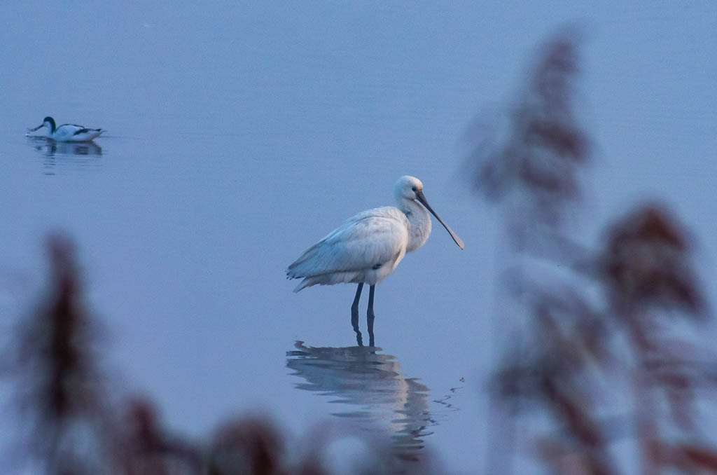 Sortie Réserve Ornithologique du Teich - 21 octobre 2018 _igp5119