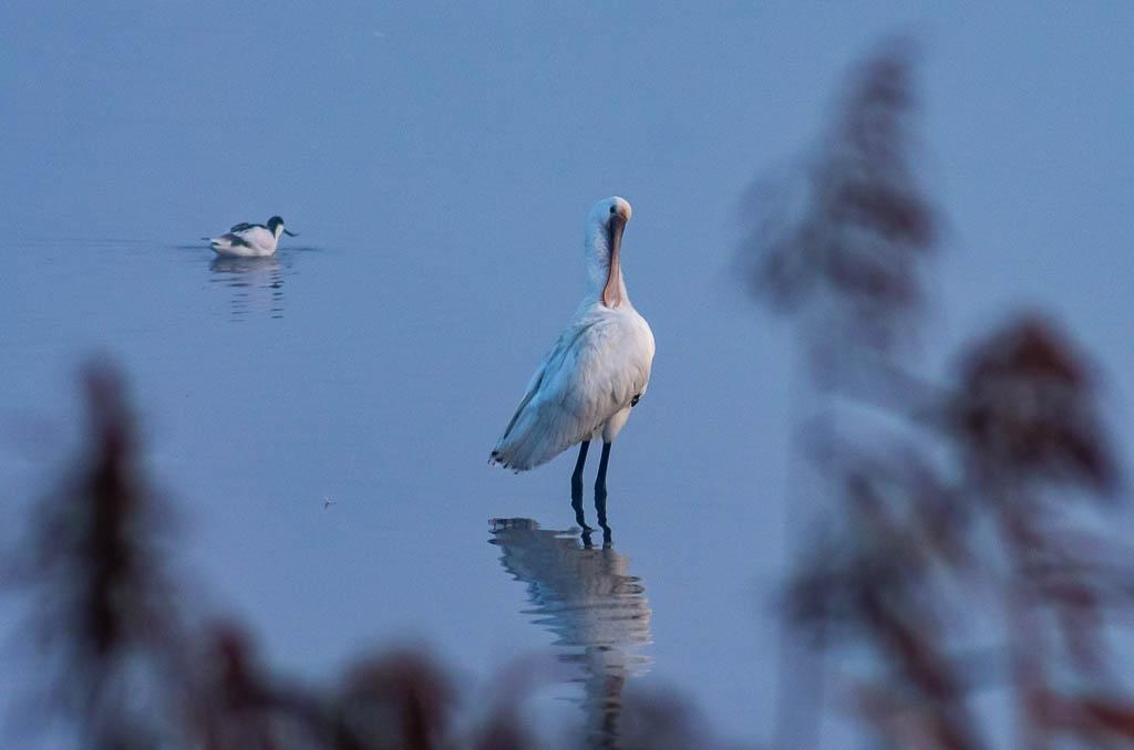Sortie Réserve Ornithologique du Teich - 21 octobre 2018 _igp5120
