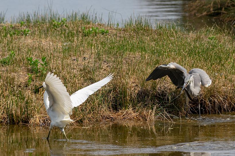 Sortie à la réserve ornithologique du Teich - 24 août 2018 _img7410