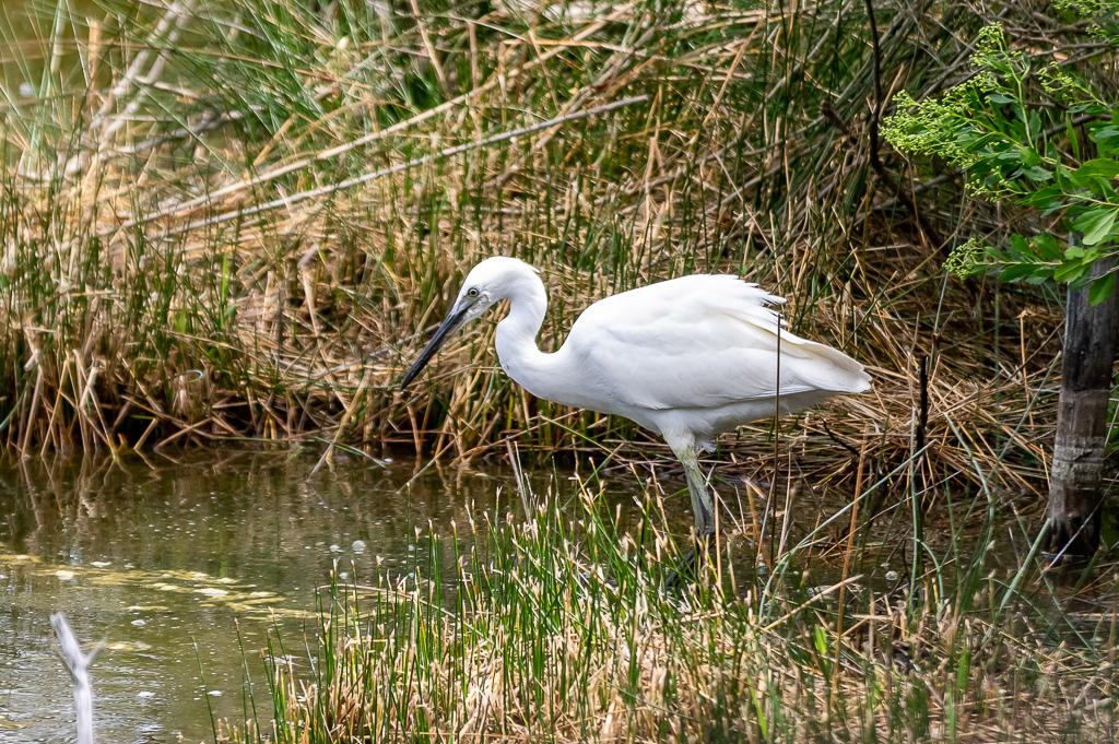 Sortie à la réserve ornithologique du Teich - 24 août 2018 - Page 2 _img7413