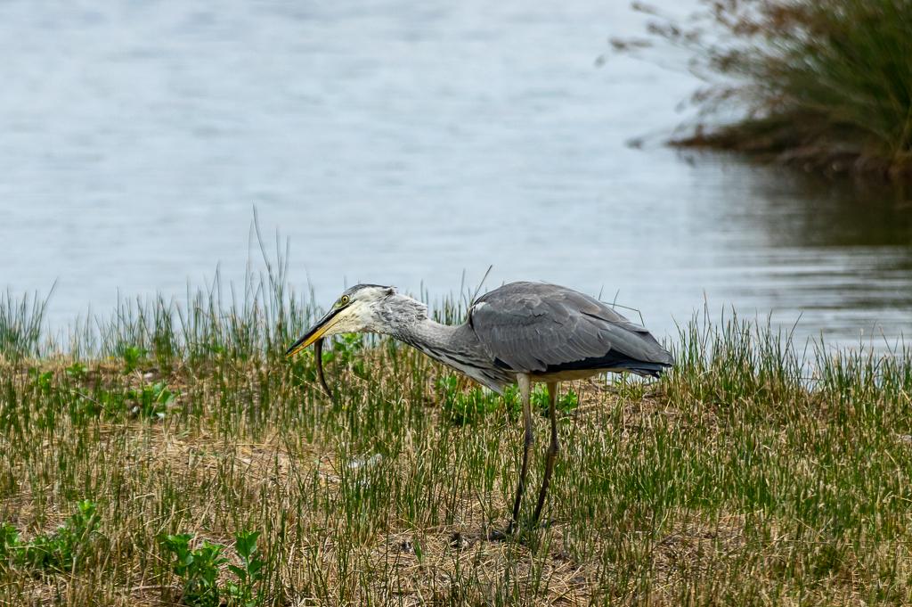 Sortie à la réserve ornithologique du Teich - 24 août 2018 - Page 4 _img7414