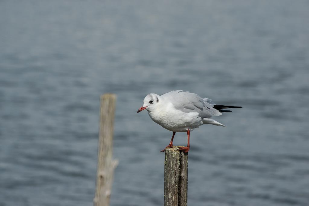 Sortie à la réserve ornithologique du Teich - 24 août 2018 - Page 6 _img7512