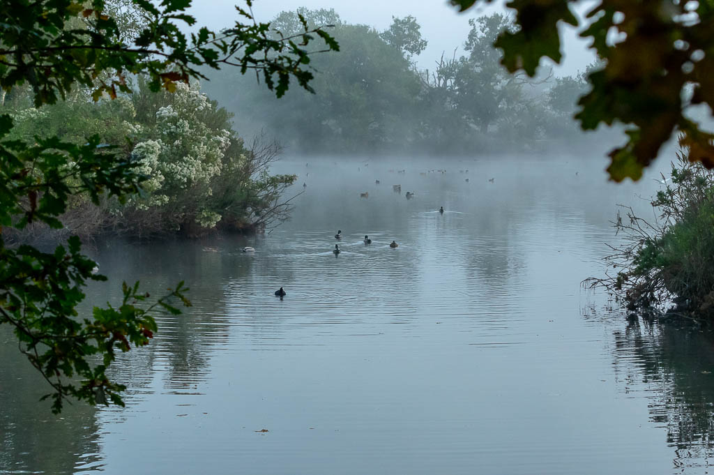 Sortie Réserve Ornithologique du Teich - 21 octobre 2018 _img7912