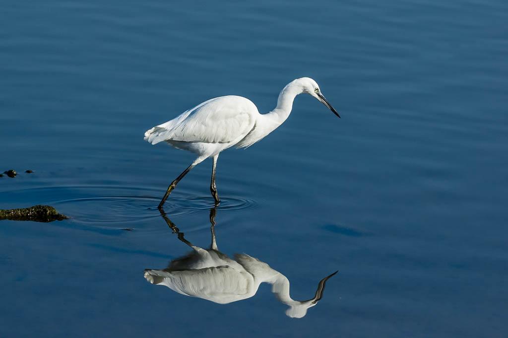 Sortie Réserve Ornithologique du Teich - 21 octobre 2018 - Page 4 _img8017