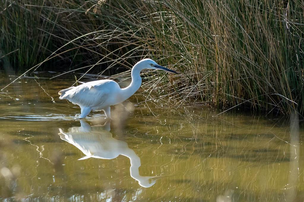 Sortie Réserve Ornithologique du Teich - 21 octobre 2018 - Page 5 _img8019