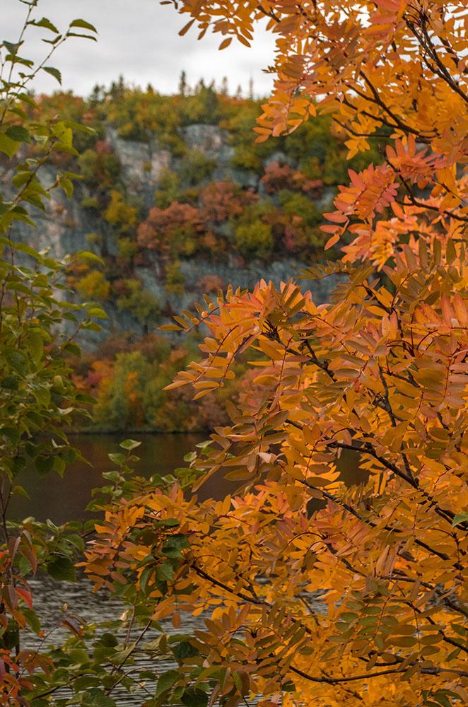 Les premières couleurs de l'automne  3113pe10
