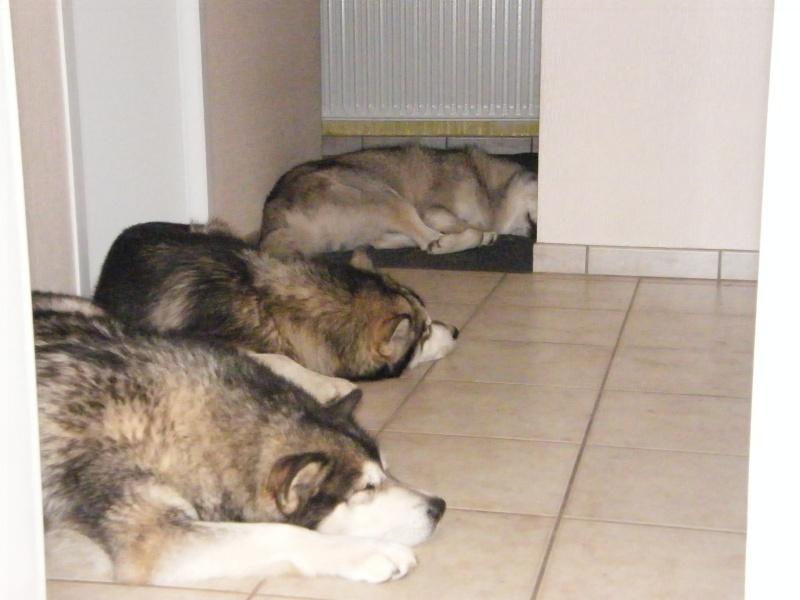 Nos loups grandissent, postez nous vos photos - Page 8 Dscf2211