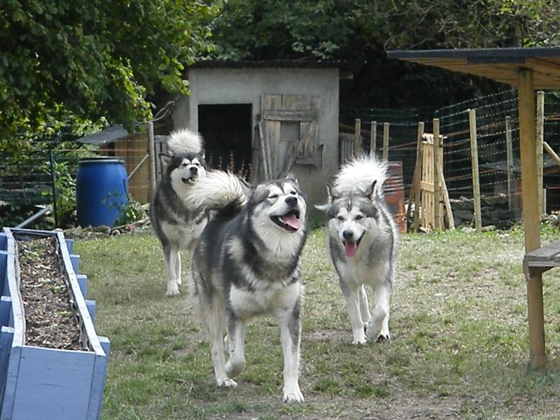 Nos loups grandissent, postez nous vos photos - Page 8 Dscf2212