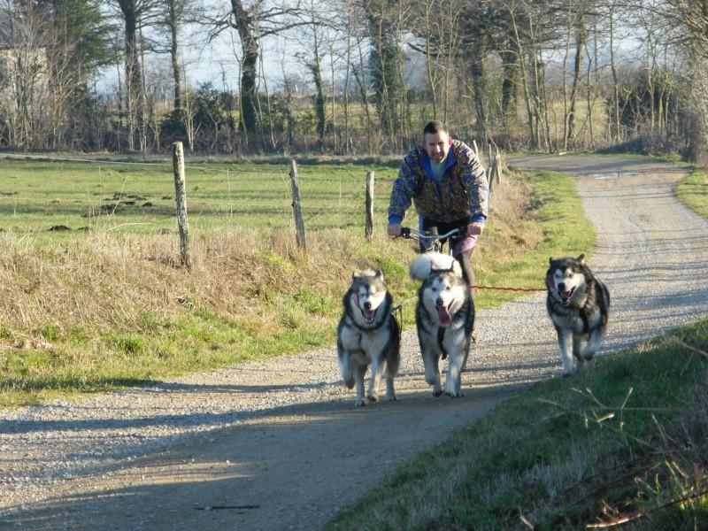 Nos loups grandissent, postez nous vos photos - Page 8 Dscf2613