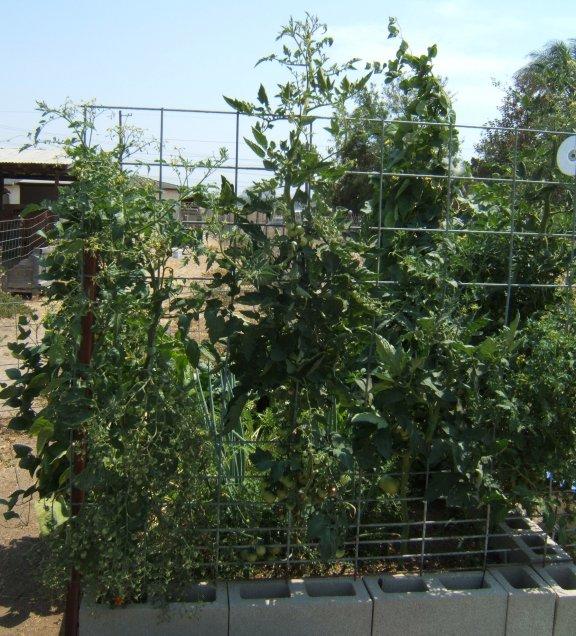 Best and worst trellis netting? Garden10