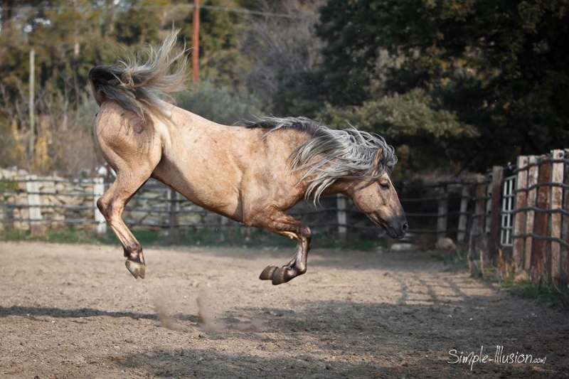 Concours photos, Quand nos chevaux font les fous : VOTES FERMES --> Gagnante COLOMBE Colomb10