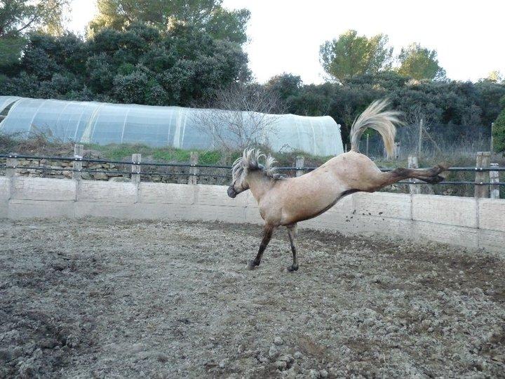 Concours photos, Quand nos chevaux font les fous : VOTES FERMES --> Gagnante COLOMBE Colomb11