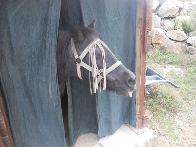 Concours photos, Quand nos chevaux font les fous : VOTES FERMES --> Gagnante COLOMBE Manon-10