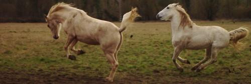 Concours photos, Quand nos chevaux font les fous : VOTES FERMES --> Gagnante COLOMBE Passio10