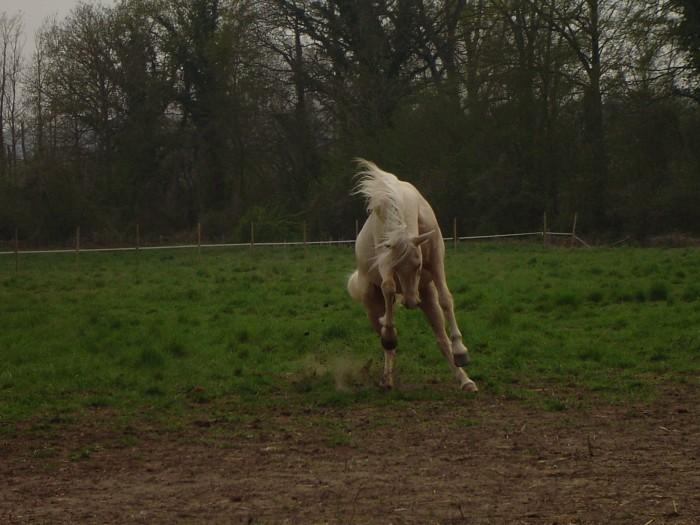 Concours photos, Quand nos chevaux font les fous : VOTES FERMES --> Gagnante COLOMBE Passio11