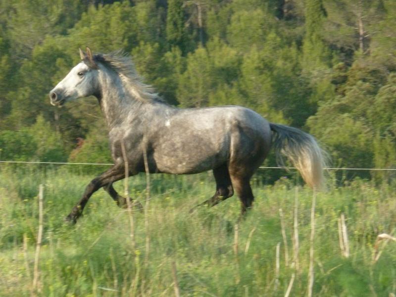 Concours photos, Quand nos chevaux font les fous : VOTES FERMES --> Gagnante COLOMBE Rafaa110