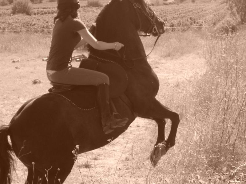 Concours photos, Quand nos chevaux font les fous : VOTES FERMES --> Gagnante COLOMBE Rafaa210