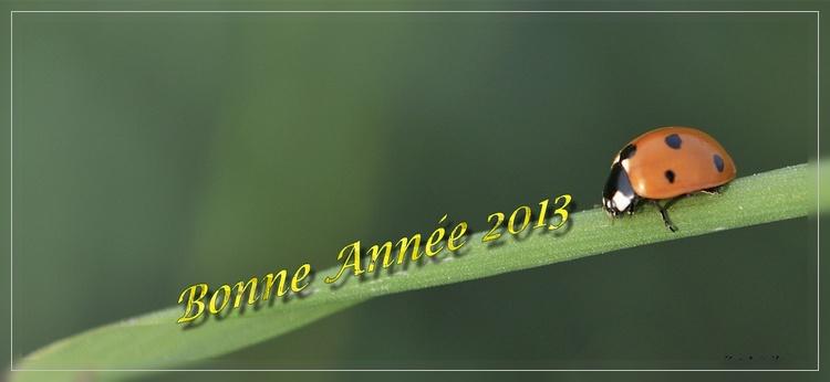 Bonne année 2013 Voeux210