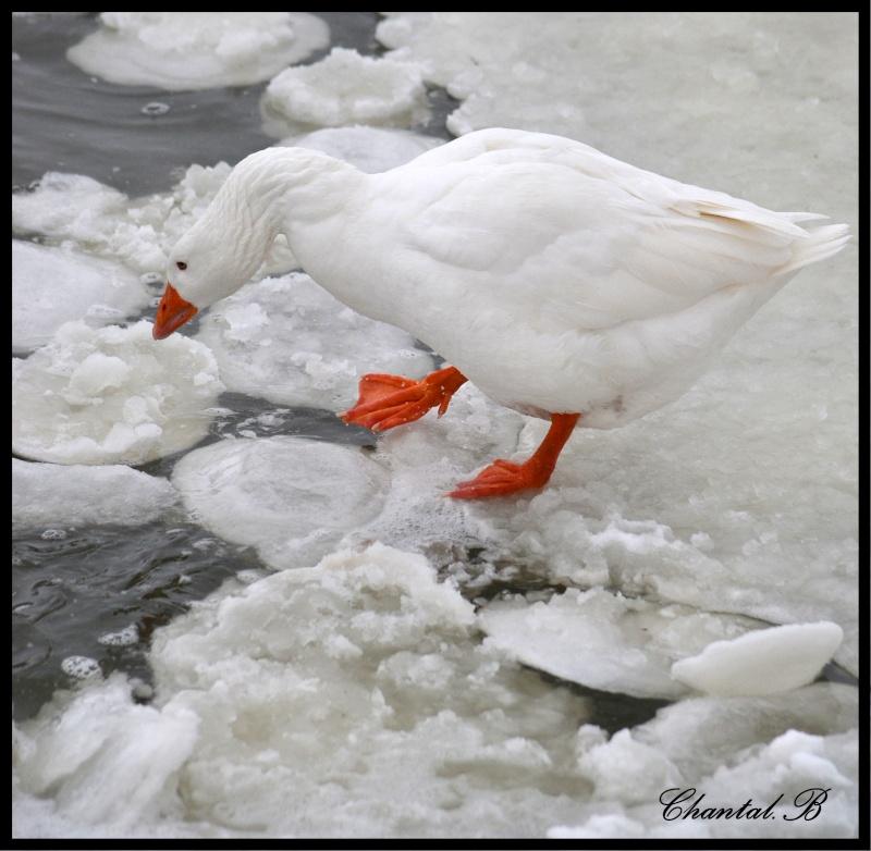 bain de glace 810
