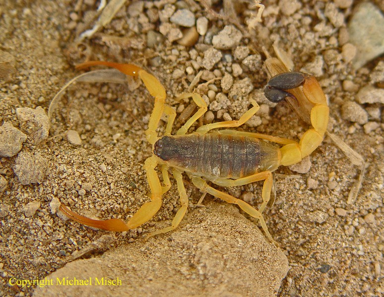 FS Various Scorpions - GER Hotten12