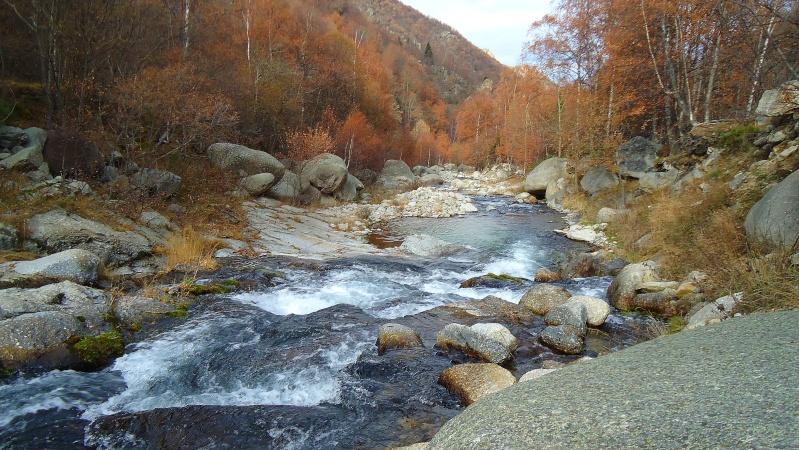 couleurs d'automne Dsc02714