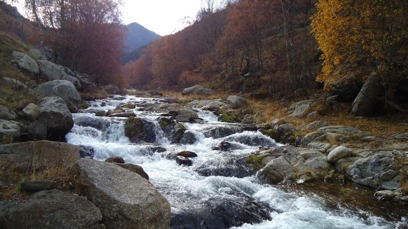 couleurs d'automne Dsc02715