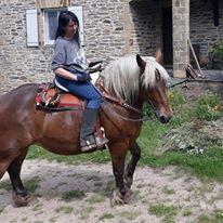 SHANA - Trait Comtois née en 2006, et BB Chérokis (ONC Trait - 2012) - adoptés en juillet 2011 par stephele12 - Page 5 Shana310
