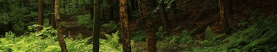 La Forêt Sans_t15