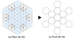 La fleur de vie Fruit-10
