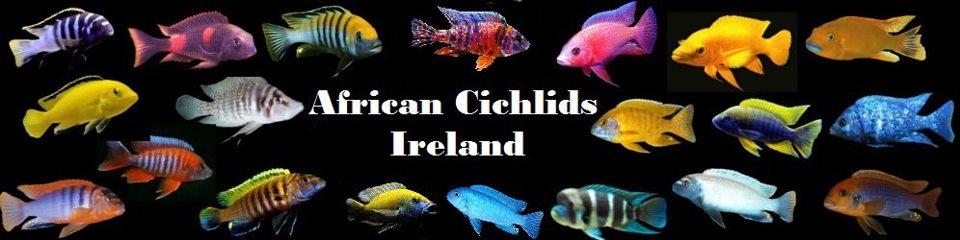 African Cichlids Ireland