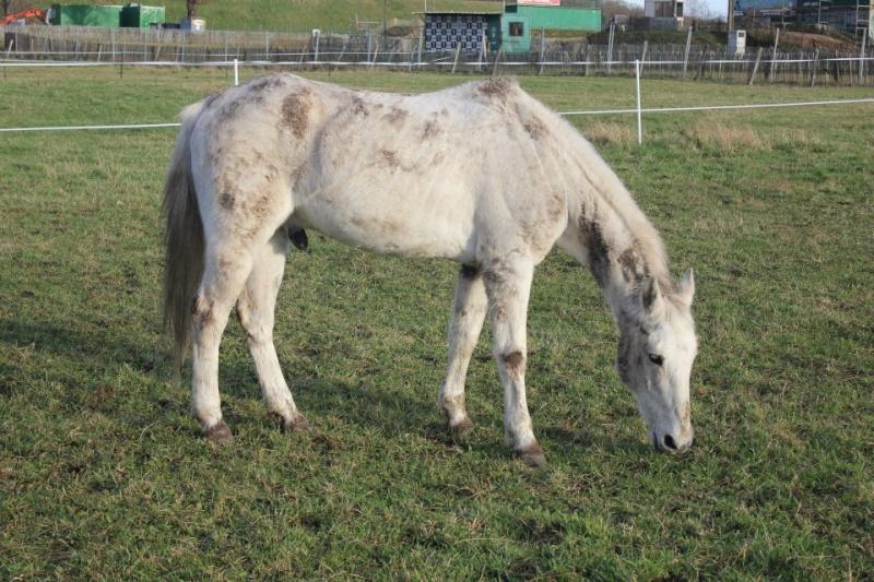 Alceste, hongre de 25 ans, adopté par Pacha ! Alcest11
