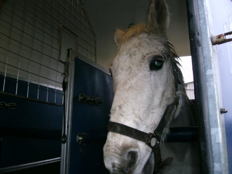 Alceste, hongre de 25 ans, adopté par Pacha ! Alcest12