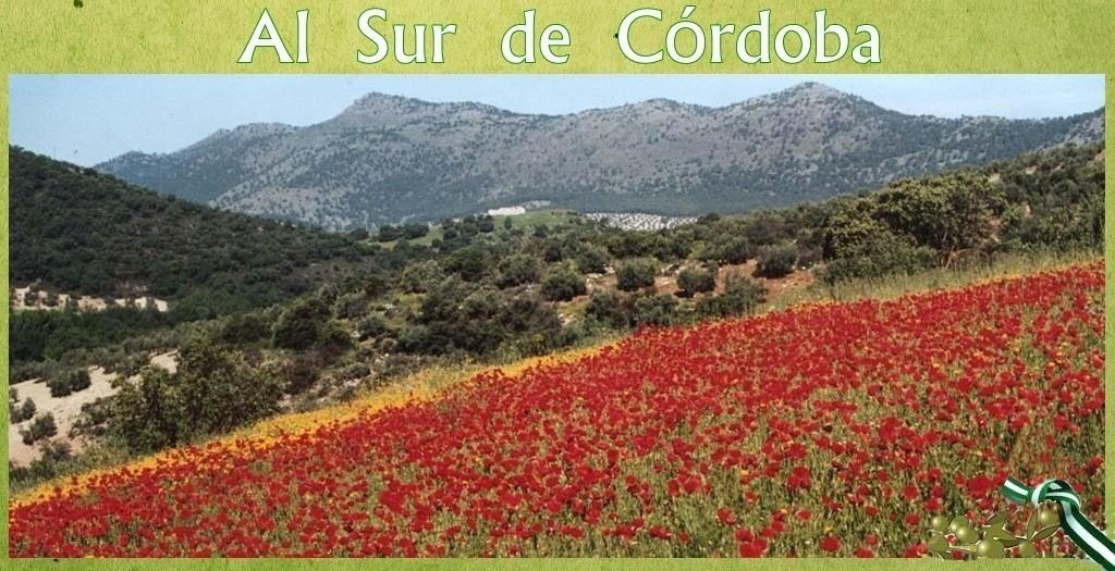 alsurdecordoba.com