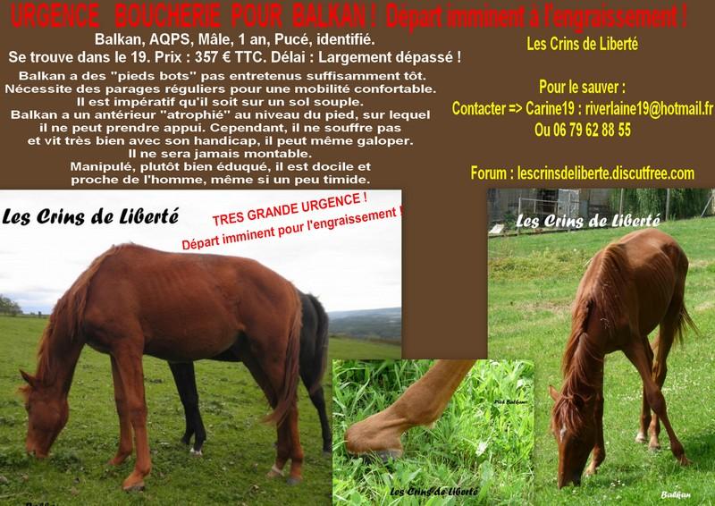 (Dept19) BALKAN, ONC (AQPS), sauvé par Cigale19!!! (Juin 2013 ) Affich14