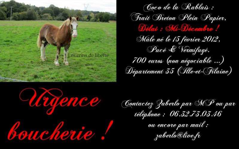 Dpt 35 - Coco - Trait Breton PP - Sauvé par Euryale ! (Janvier 2013) - Page 15 Coco10