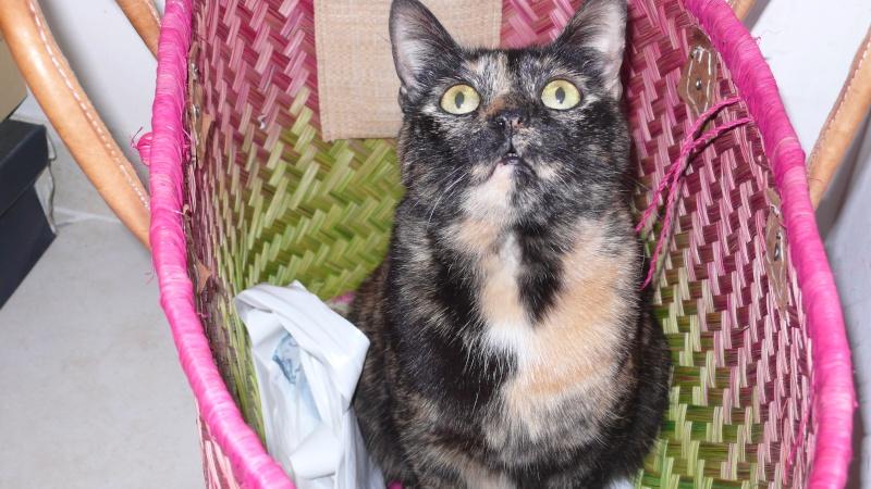Les chats à adopter qui s'entendent avec les chiens P1010410